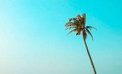 Be like the Palm Tree